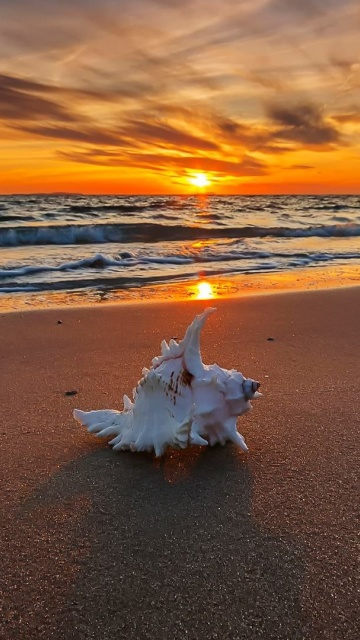 Sfondi Sunset on Beach with Shell 360x640