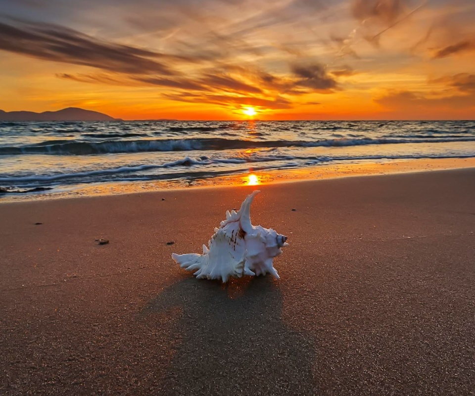 Sunset on Beach with Shell wallpaper 960x800