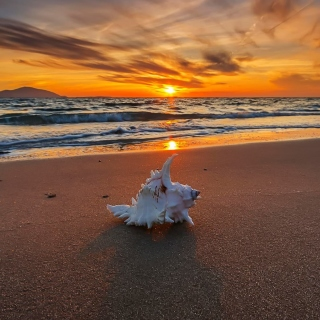 Sunset on Beach with Shell - Fondos de pantalla gratis para 1024x1024