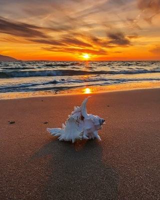 Kostenloses Sunset on Beach with Shell Wallpaper für 320x480