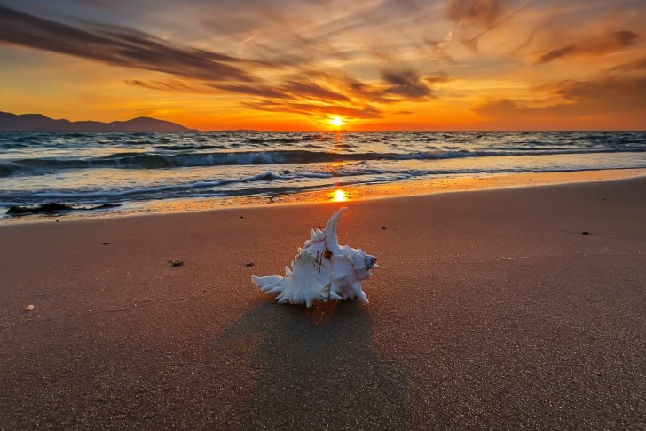 Sunset on Beach with Shell wallpaper