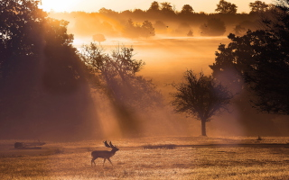 Deer At Meadow In Sunlights sfondi gratuiti per Android 2880x1920
