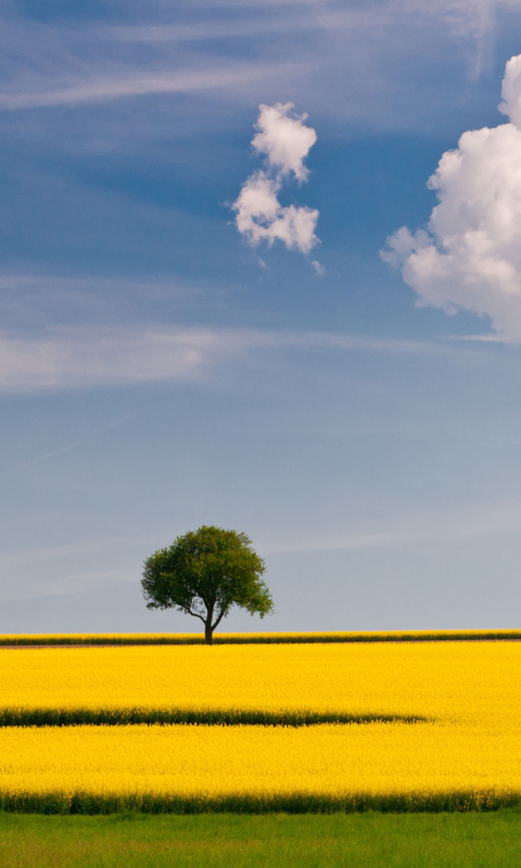 Sfondi Tree In Field 480x800