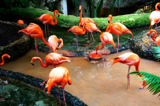 Free Pink Flamingo Picture for Android, iPhone and iPad
