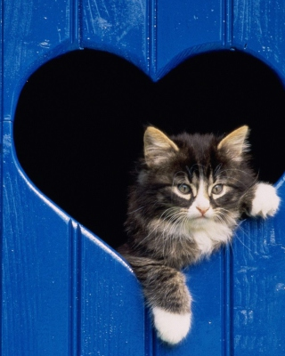 Cat In Heart Background for Nokia Asha 311