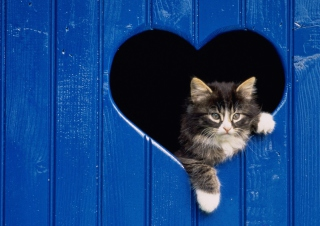 Cat In Heart - Fondos de pantalla gratis