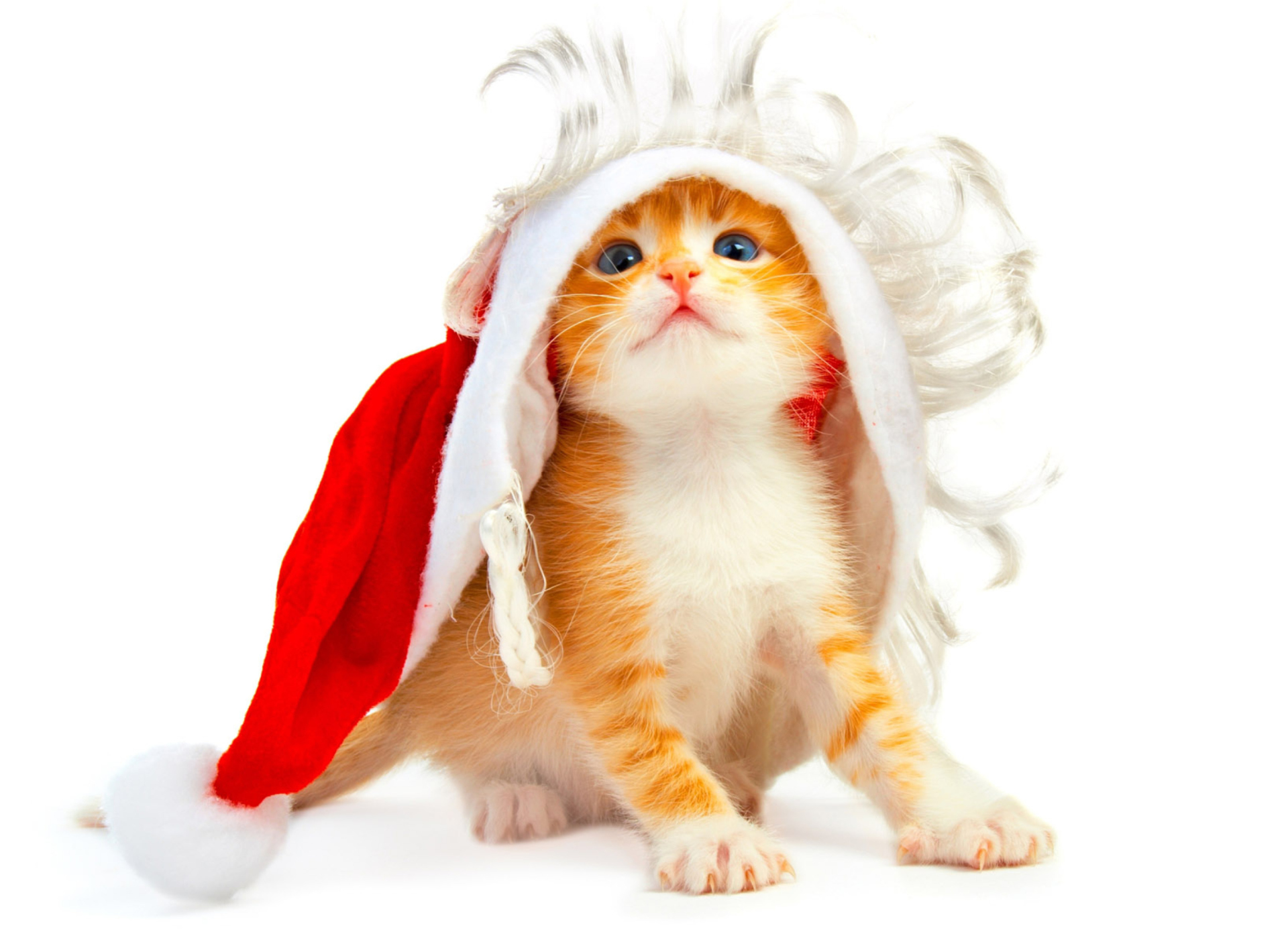 Screenshot №1 pro téma Cat Wanna Be Santa 1920x1408