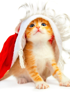 Screenshot №1 pro téma Cat Wanna Be Santa 240x320