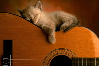 Guitar Kitten Wallpaper for Android, iPhone and iPad