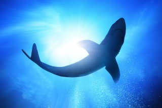 Big Shark Background for Android, iPhone and iPad